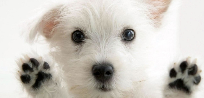 Lynchburg's Cutest Pet Contest