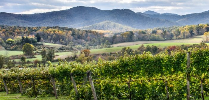October Wine Wednesday: Celebrating Virginia Wine Month