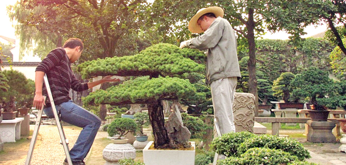 Bonsai Equal Parts Science Art And Philosophy