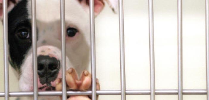 foster dog adopt a dog