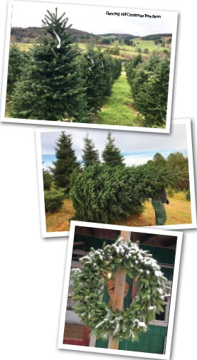 Dancing Hill Christmas Tree Farm