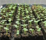 Gardener's Workshop Soil Blocking Kit