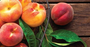 growing the perfect peach