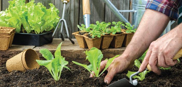 Lettuce 101